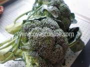 brokoli01